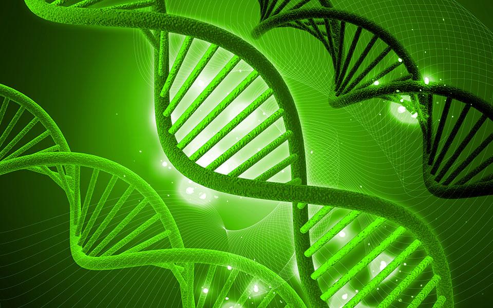 Genetic Testing & Obesity